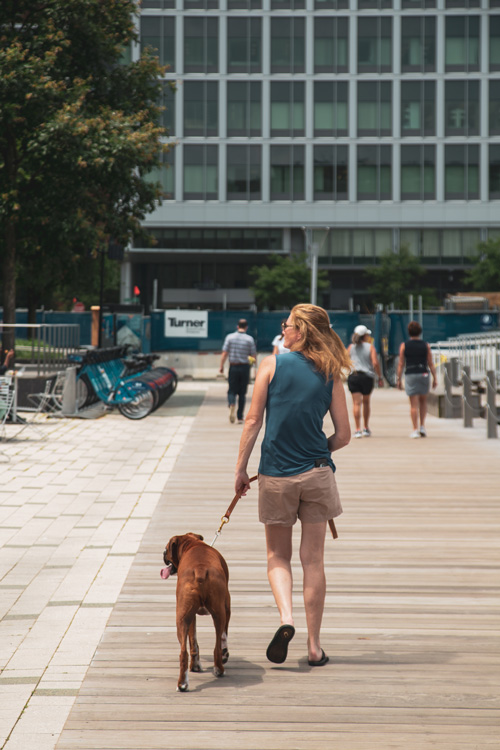 A women walks her dog in a crowd of people on a dock near Ora Seaport apartments in Boston
