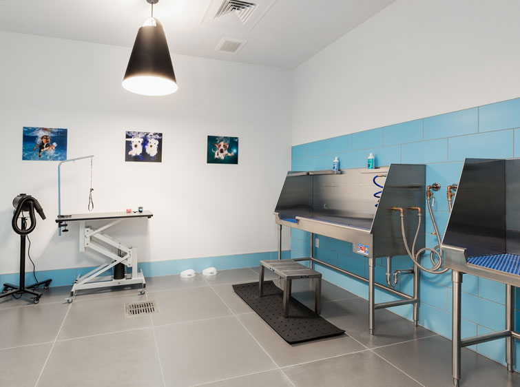 Dog grooming room with bathing stations